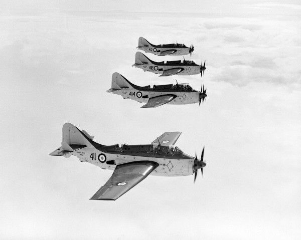 Fairey Gannet AS.1 and T.2 aircraft of 824 Squadron in flight, 26 April 1955